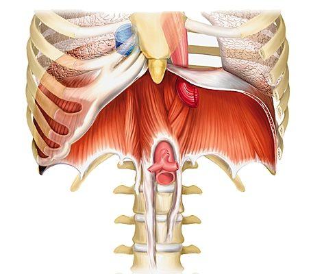 Traitement du diaphragme et de la respiration par l'ostéopathe à Paris