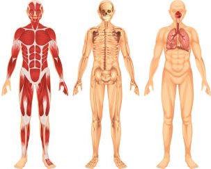 Ostéopathie musculo squelettique - viscérale - crânienne